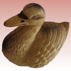 Celluloid Duck