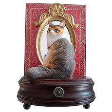 Music Box With Cat