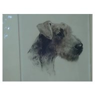 Airedale terrier  etching  signed  Eberhardt Germany18x20