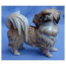 Pekingese Tibetan Spaniel Augarten Austria dog