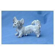 Skye Silky terrier Augarten Austria dog