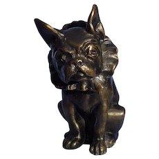 bronze French Bulldog w collar