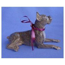 """beautiful Brindle BOXER dog Denmark 6"""""""