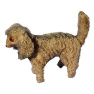 antique curly coat Retriever salon dog French fashion doll Germany 3""