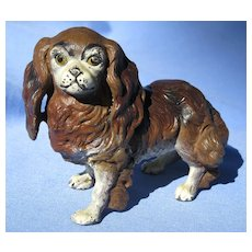 Cavalier King Charles Spaniel  Heyde Germany dog 4""
