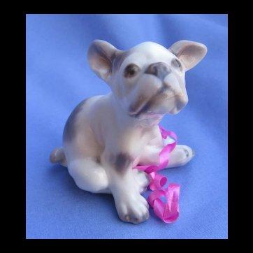 "French bulldog Dahl Jensen Denmark puppy dog 3"""