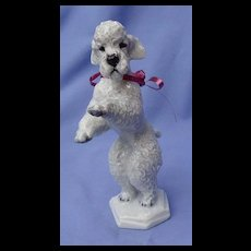 "1930 grey POODLE Rosenthal dog Germany 7"""