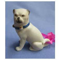 """Victorian bisque PUG blue bell collar doll house size 2"""""""