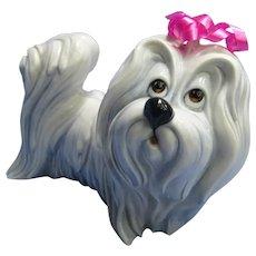 "Maltese Havanese  Silky Terrier Cacciapuoti Righetto Italy dog 6"""
