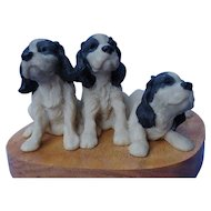 English Springer Spaniel puppies Ralph Massey #12/150