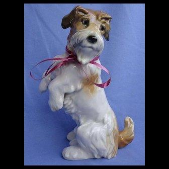 "Sealyham  Cesky terrier Ens Germany dog 8"""