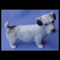 1930 Sealyham Cesky terrier dog AVP Germany