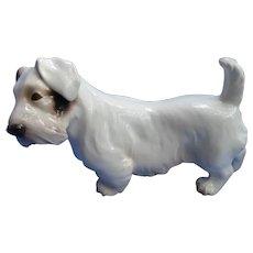 """Sealyham  Cesky terrier Bing Grondahl Denmark dog 6"""""""