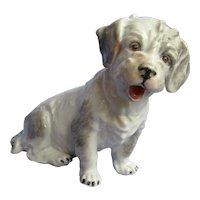 """Sealyham  Cesky terrier Dresden Germany dog 5"""""""