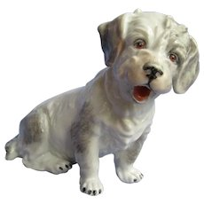 Sealyham  Cesky terrier Dresden Germany dog 5""