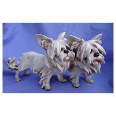 "Skye Silky Yorkshire Terrier Cacciapuoti Italy dogs 10"""
