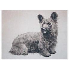 Skye Silky terrier etching Eberhardt