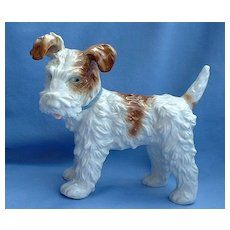 """1940s Wire Haired Fox Terrier Jack Russell dog Hutschenreuther Germany 8"""""""