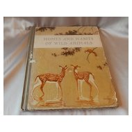 Homes and Habits of Wild Animals By Schmidt
