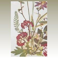 Pair of Wildflower prints (Watercolor) by artist Larks