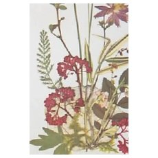 Pair of Wildflower prints (Watercolor) by artist Larks