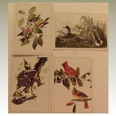 Audobon Bird Collection Portfolio