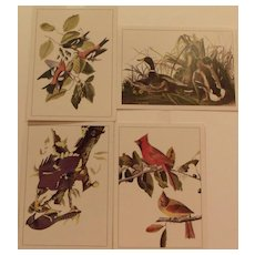 Audobon Bird Collection Portfolio
