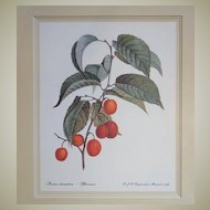 Botanical Print Cherry Branch