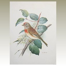 Bird Lithographs by Gonner