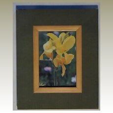 Framed Cannas Photographic print