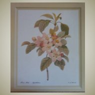Botanical Peach Blossoms Lithograph