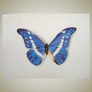 Butterflies Lithographs set of 4