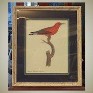 Bird Botanical Lithograph Framed Art