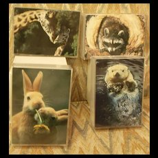 Lithograph Animal Prints in Lucite Box Frames