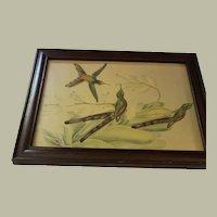 Hummingbirds Lithograph Framed in Mahogany Wood