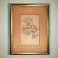 Botanical Etching-W. Curtis St. George