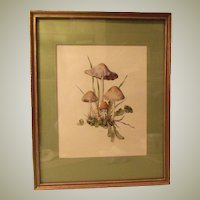 Mushrooms Framed Art