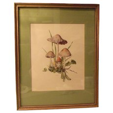 Mushrooms Framed Art FREE S&H