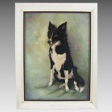 Oil on Canvas of a Border Collie Dog Signed Barbara Dixon Drewa