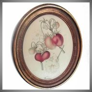 Vintage Botanical Chromolithograph Fraises Belgium G Severeyns Strawberries Framed