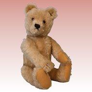 14-Inch Steiff Teddy Bear all original, with glass eyes, no button in ear CUTE!
