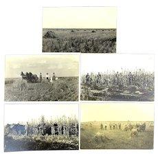 5 Real Photo Postcards Farmer n Suits in Kansas Corn Field RPPC c1915