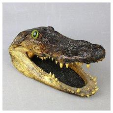 Vintage 10-Inch Alligator Head From 6-Foot Florida Gator Taxidermy Skull