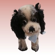 Steiff Cockie, Black and White Cocker Spaniel Dog, No Id's,1968 to 1976