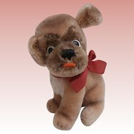 Steiff Mopsy Puppy Bull Dog, Steiff Button, 1969 to 1970