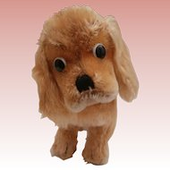 Steiff  Cockie,  Cocker Spaniel Dog , 1965 to 1976, No Id's