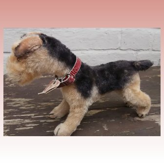 Steiff Terry  Airedale Terrier 1951 to 1961, Steiff Chest Tag A/F