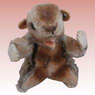 Smallest Size Steiff Beaver, Steiff Button, 1959 to 1964