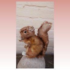 Steiff Perri Squirrel 1965 to 1970, Steiff Chest Tag, Walt Disney