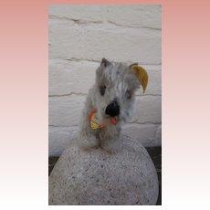 Steiff Tessie Schnauzer Dog 1954 to 1958, Steiff Button, Steiff Chest Tag